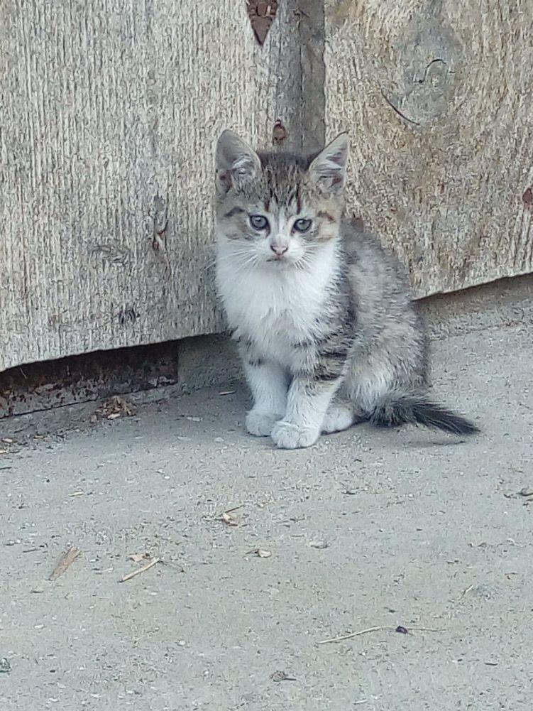 Oddam za darmo w dobre ręce małe, śliczne kotki! :)